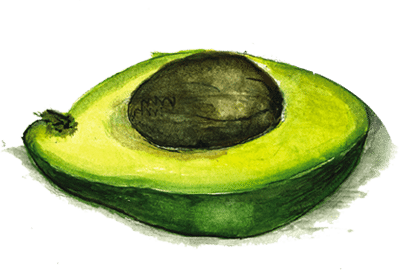 aguacate-final